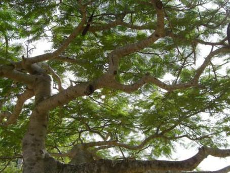 Tree Snobbery, Pt. 1