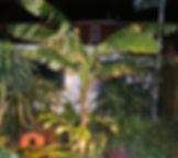 DSC06374_edited.jpg