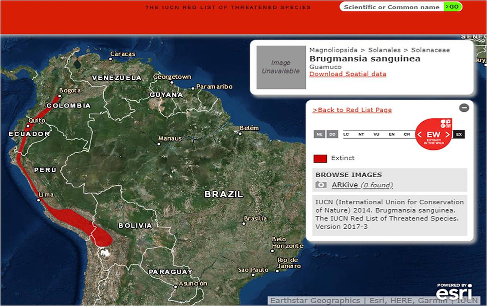Brugmansia Sanguinea Distribution