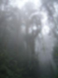 200px-Bellavistacloudforestenvironment-.