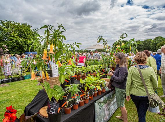Rare Plant Fair 2019-5783.jpg