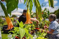 Rare Plant Fair 2019-5802.jpg