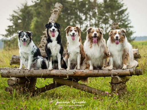 Marley, Sunny, Abby, Shailoh & Lima