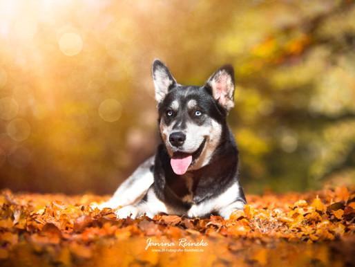 Fotowalk im Herbstwald
