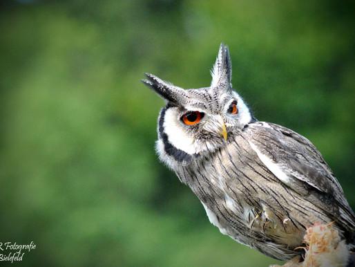Falkenshow im Aatal