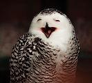 happy owl (2).jpg