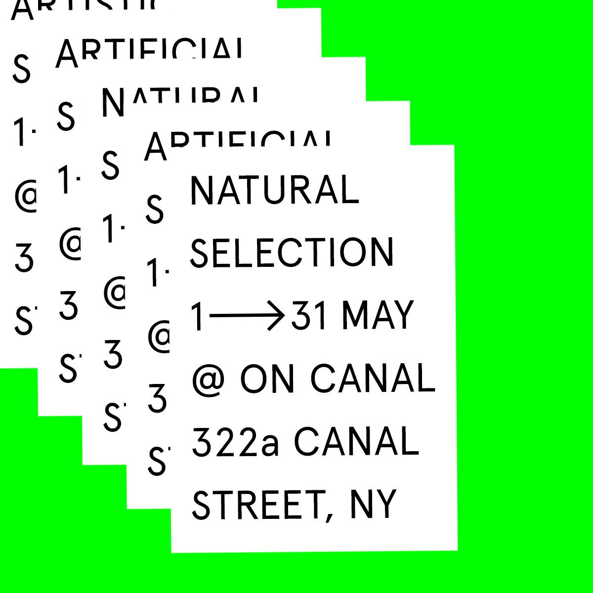 natural selection - square - still - 5.j