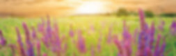dōTERRA_Lavender.jpg