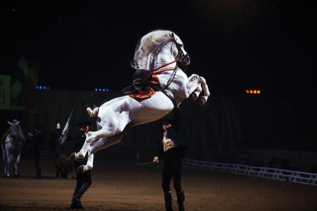 Horse Show, Jerez