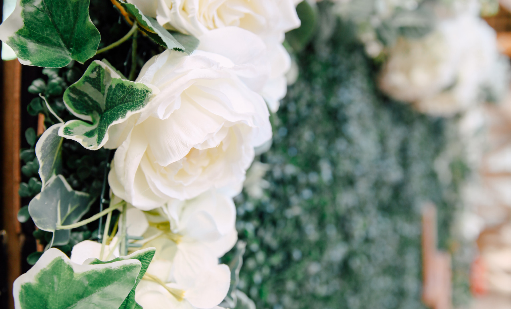 White Drapes & Roses on Hedge Wall