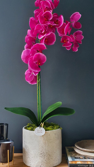 large two stem fuchsia orchid