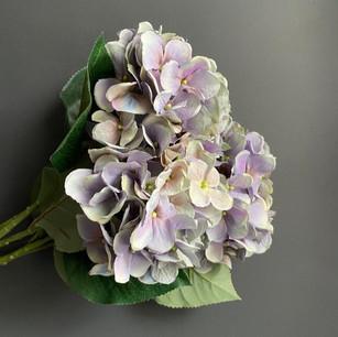 subtle blooms