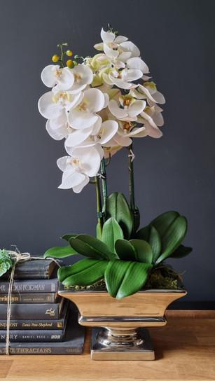 3 stem white orchid