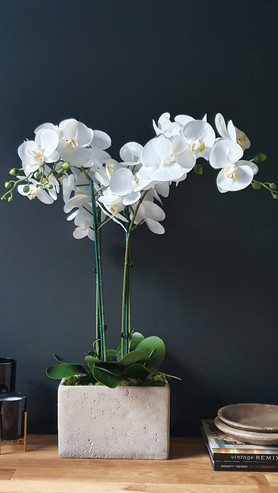 """""""Large 4 Stem White Orchid"""""""