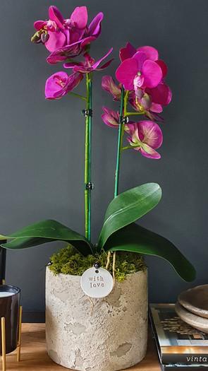 medium two stem dark pink orchid
