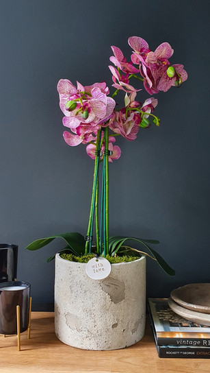 large three stem two tone pink orchid