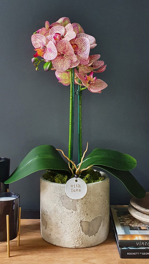 large two stem two tone pink orchid
