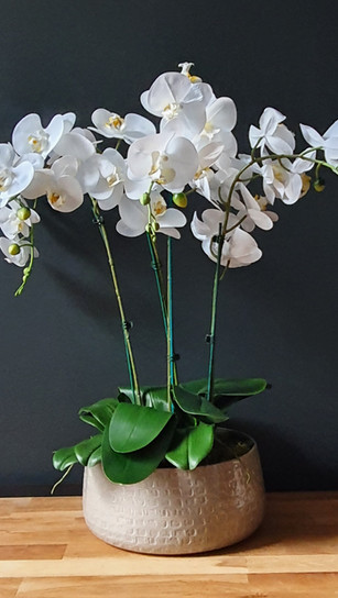 4 stem white orchid - taupe pot