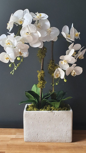 large three stem white orchid - tall cement