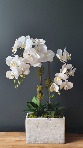 """3 Stem White Orchid"""