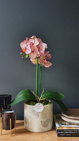 """""""Large 2 Stem Two Tone Pink Orchid"""""""