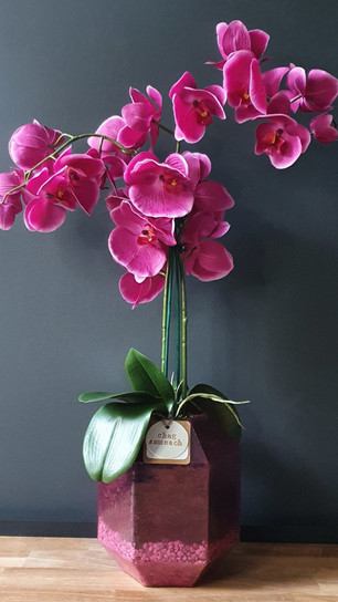 large two stem double deep pink orchid (not available)