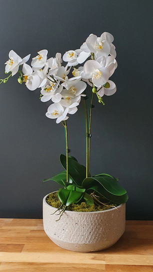 large four stem white orchid - round cement