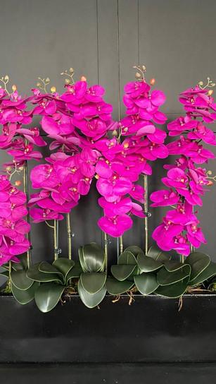 9 stem pink orchid