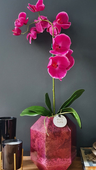 large one stem fuchsia orchid     (not available)