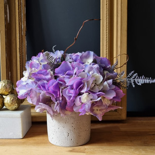 spring purple 50