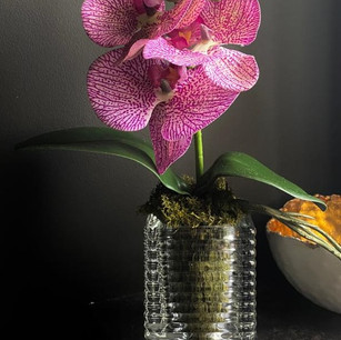 petite pink orchid 40