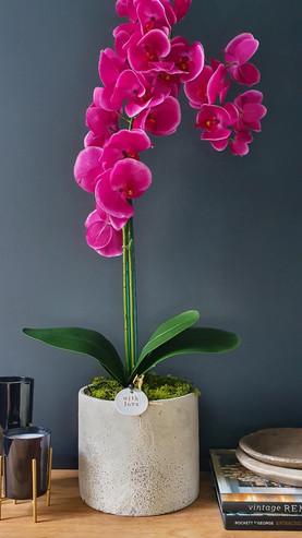 """Large 2 Stem Fuchsia Orchid"""