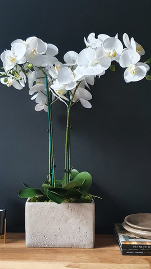 large four stem white orchid - tall cement