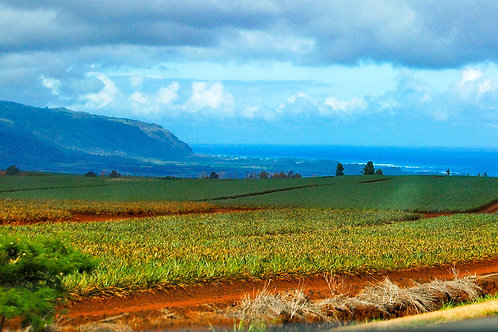 Highway 1 into North Shore Oahu Hawaii