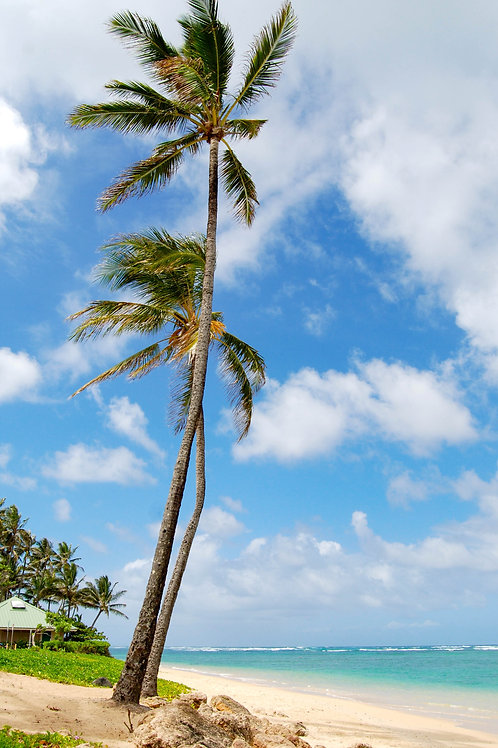 """Oahu Hawaii Titled: """"Twin Palms"""""""
