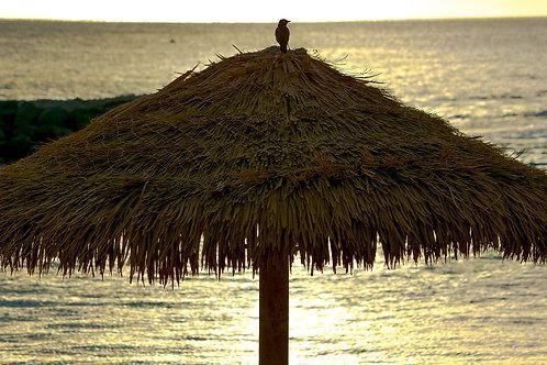 "Ko Olina""South Pacific Bird"""