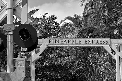 Pineapple Express Dole Plantation
