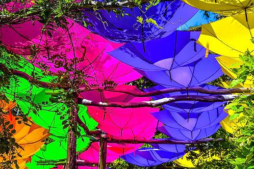 Rainbow Umbrella's
