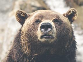 奥志賀の旅 DAY3 クマにびびり感じたことはメンターの重要性