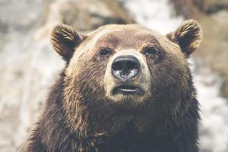 """""""Help The Bear"""""""