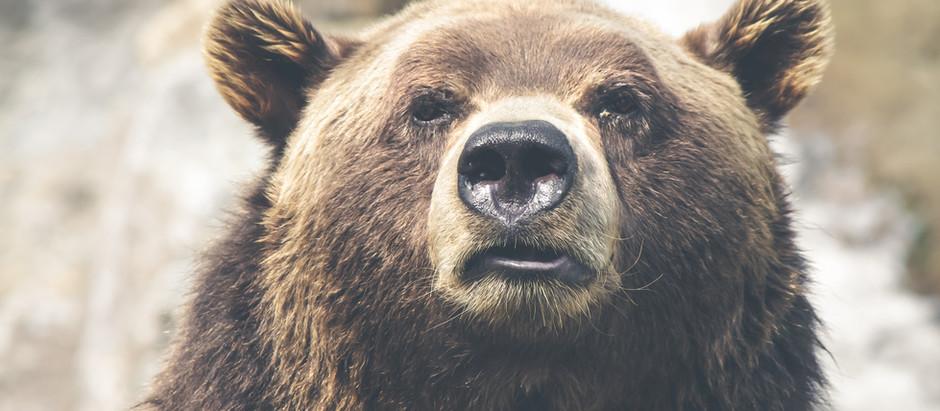 Kinda Love The Fat Bears