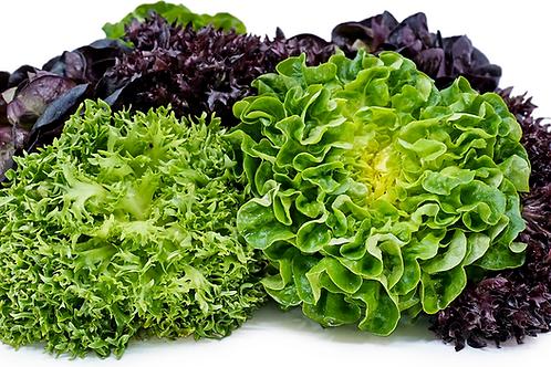 Living Lettuce (Red & Green)