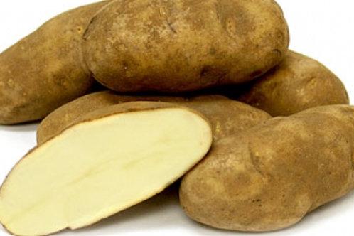 Potato - Russet