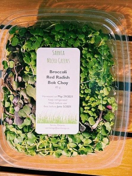 Micro Greens- Broccoli, Red Radish, Bok Choy Mix