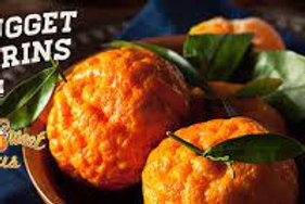 Golden Nugget Mandarines