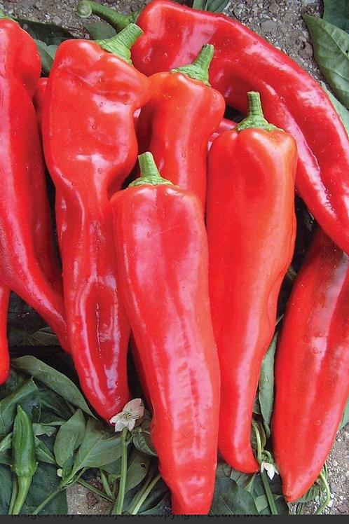 Red Sweet Shepherd Peppers