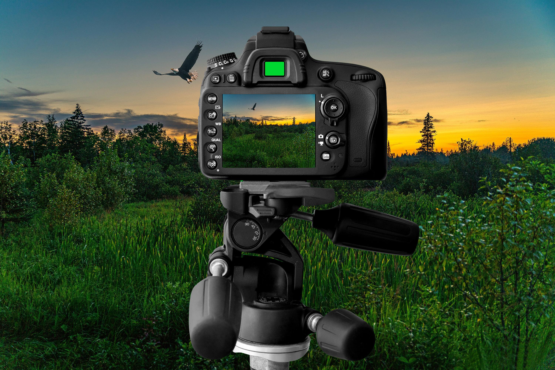 Séance de photographie