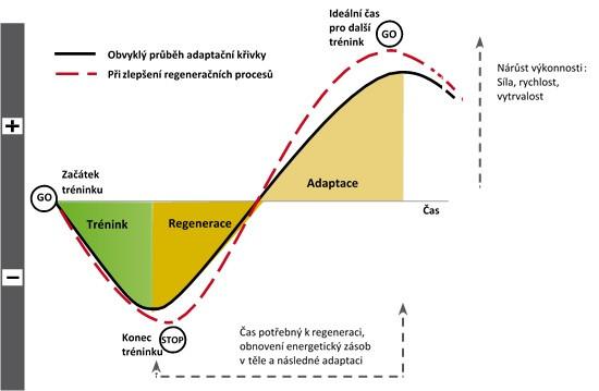 Adaptační křivka tréninku; PowerBar.com