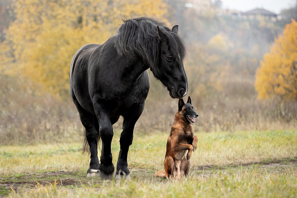 Dog breed Malinois and horse breed Perch