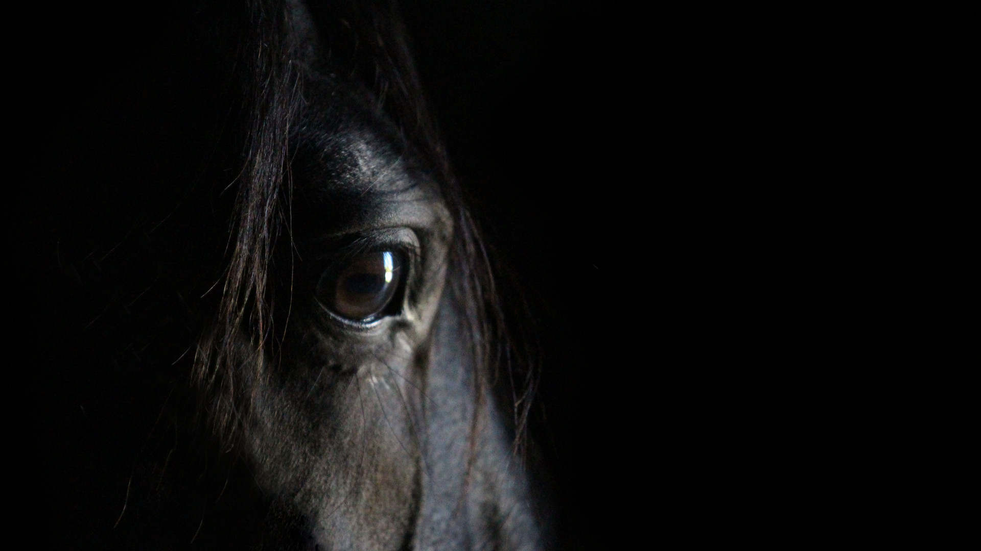 Thoughtful horse eye portrait..jpg